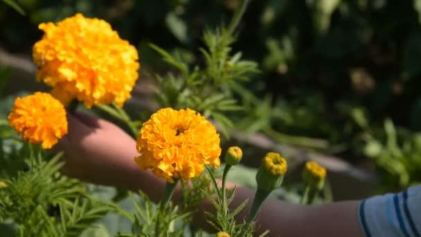 Fleurs odorantes enfant dans le jardin — Vidéo rinika © #170909078