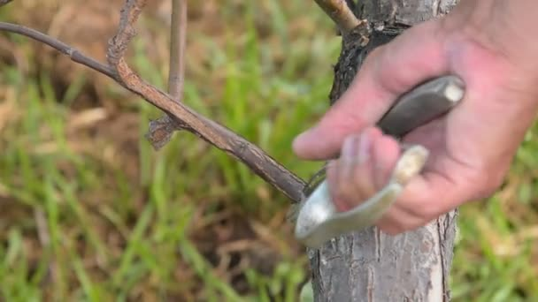 Muž strom nůžky odříznout větve