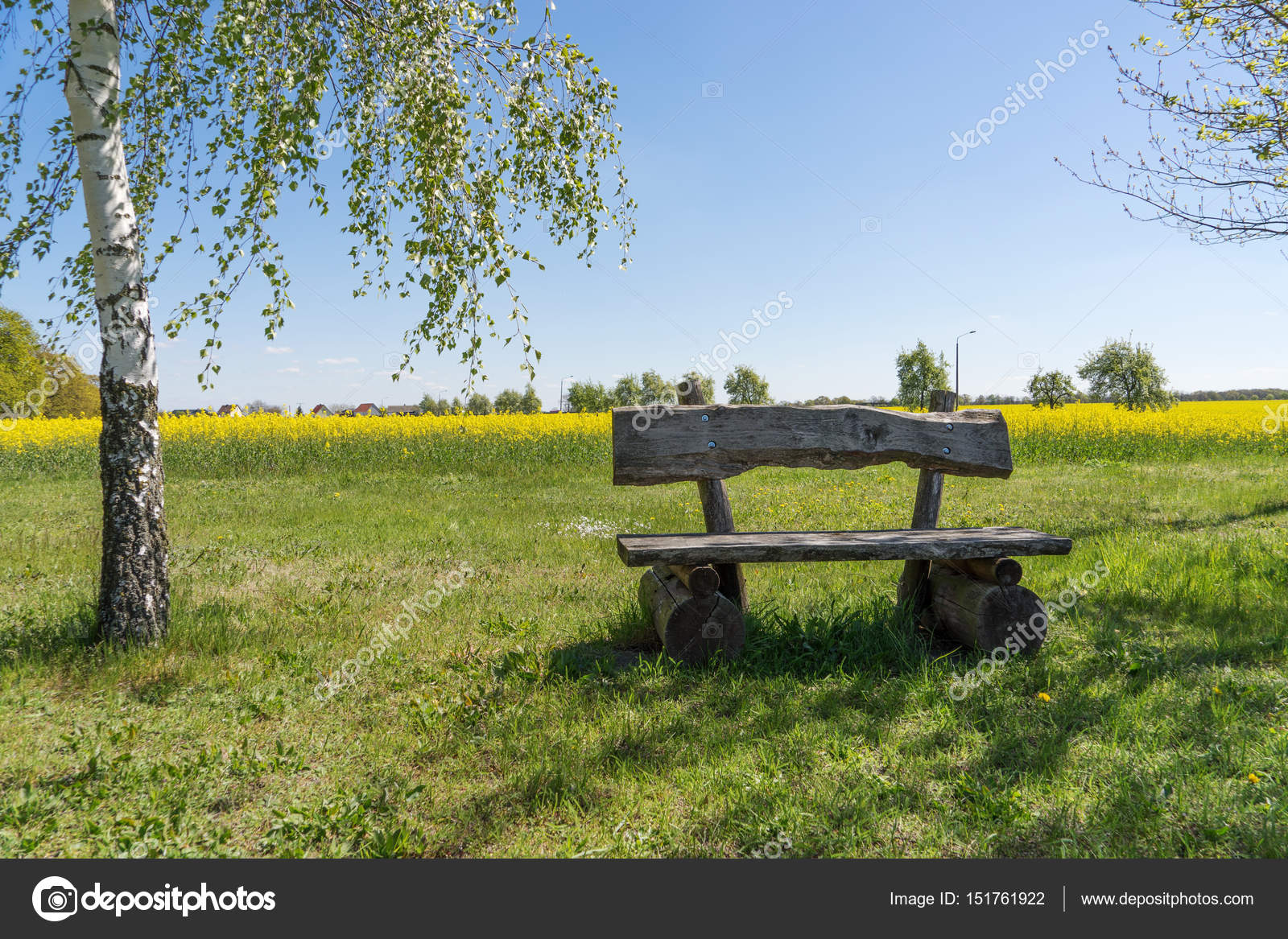 Pleasing Wooden Bench Outdoors Rape Field In The Background Stock Gmtry Best Dining Table And Chair Ideas Images Gmtryco