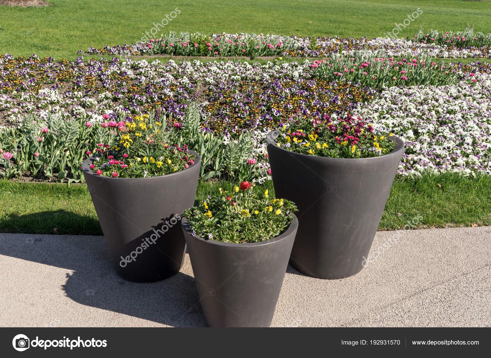 Trzy Duże Donice Kwitnących Kwiatów Parku Kwiat łóżko Tle