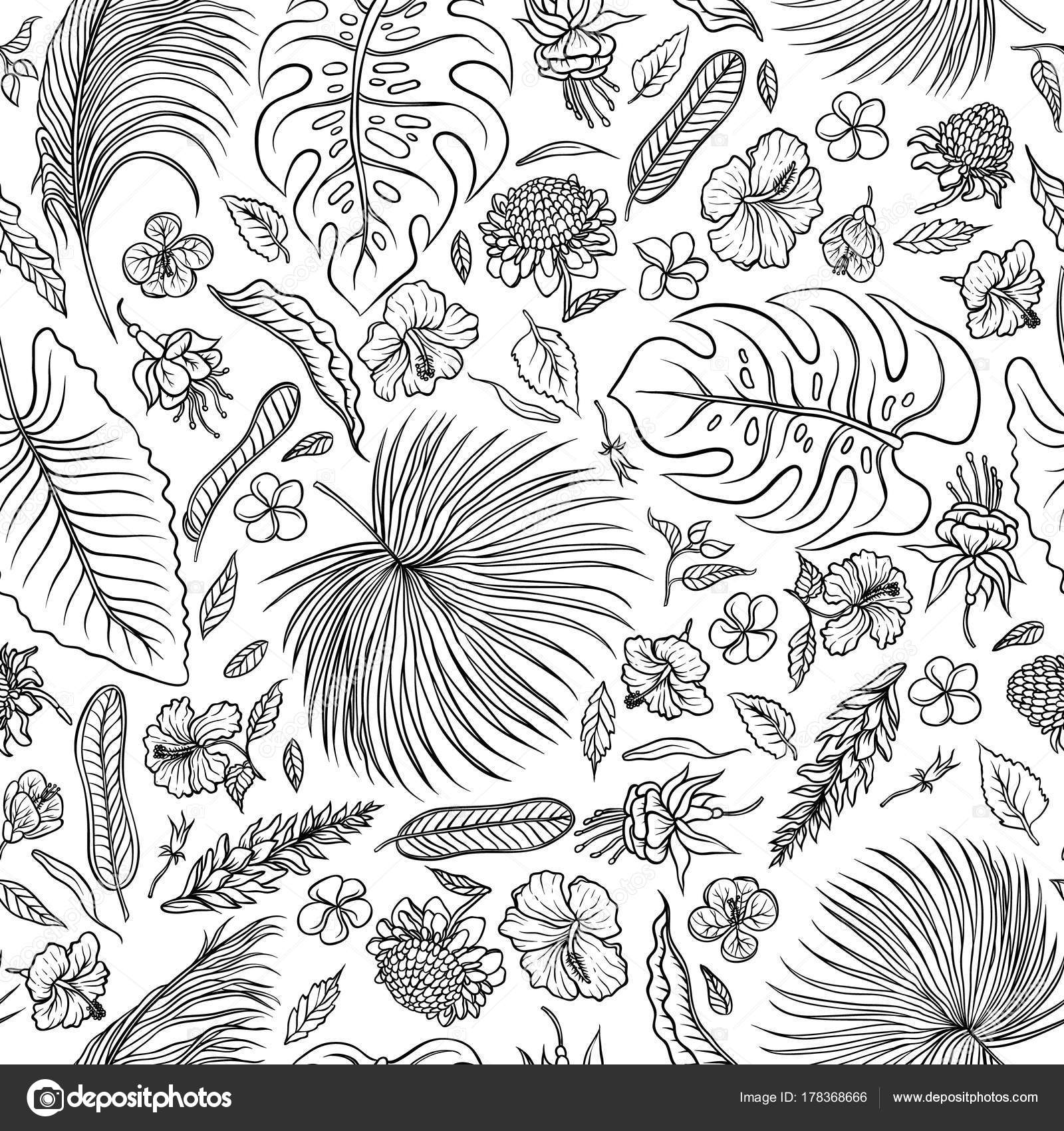 Vector sketch black and white set seamless pattern the leaves of tropical plants and exotic