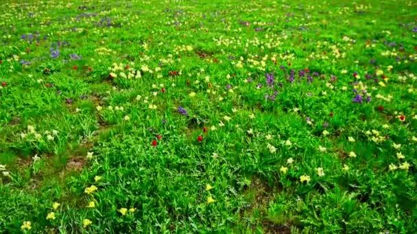 Jarní krajina s kvetoucí divoké květy