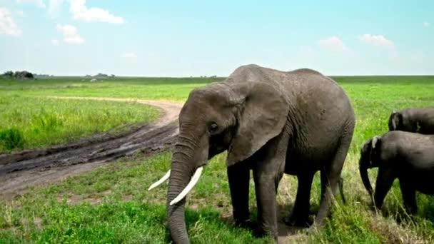 Skupina afrických slonů v savaně