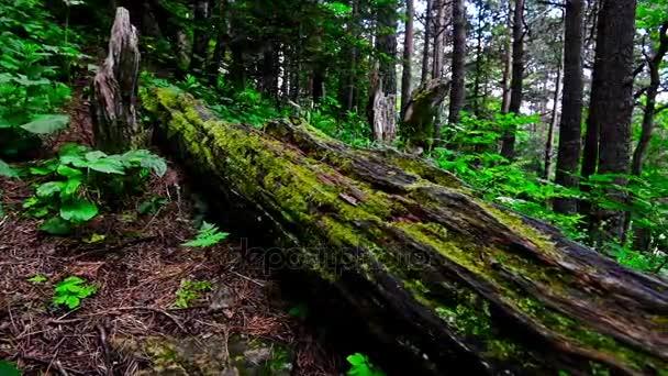 Malebný pohled na zeleného lesa a protokolu s mechem