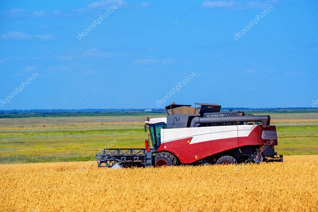 Grain harvesting combines work in wheat field