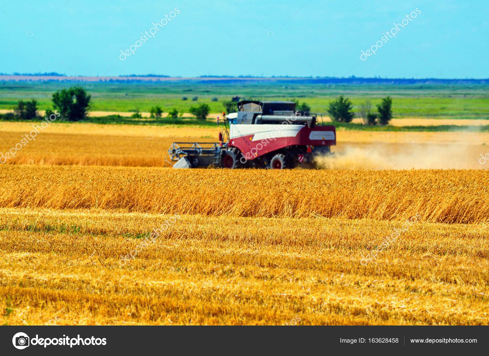 214563d10b Grano combinare mietitrici lavoro nel campo di frumento in estate — Foto di  ...