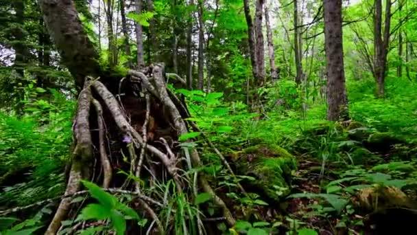 Malebný pohled zelené lesní houštiny a zpátky
