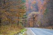 tornanti della strada attraverso alberi di autunno