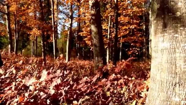 Gyönyörű őszi erdő lövés babával