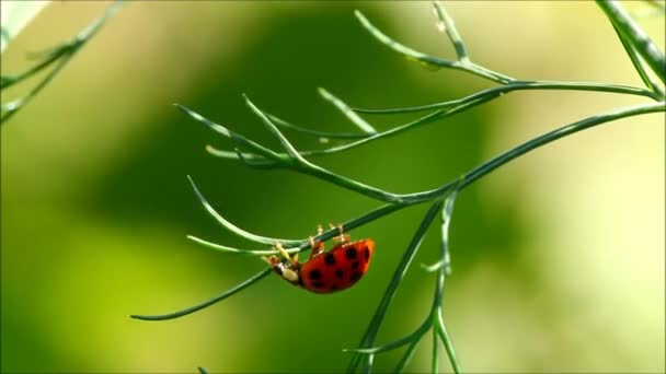 Ladybug on a green plant with green background