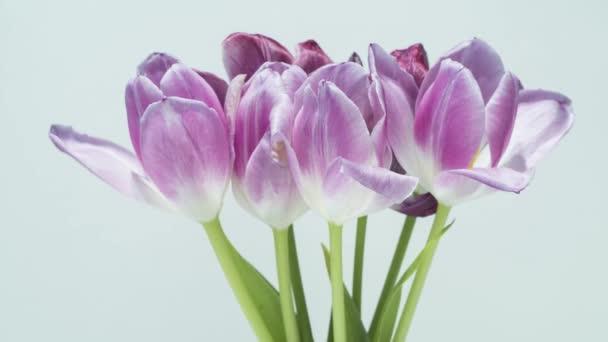 Tulipány sušení - časová prodleva