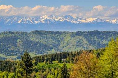 """Картина, постер, плакат, фотообои """"очаровательный весенний горный пейзаж. красиво покрытые снегом высокие вершины над холмами ."""", артикул 317678270"""