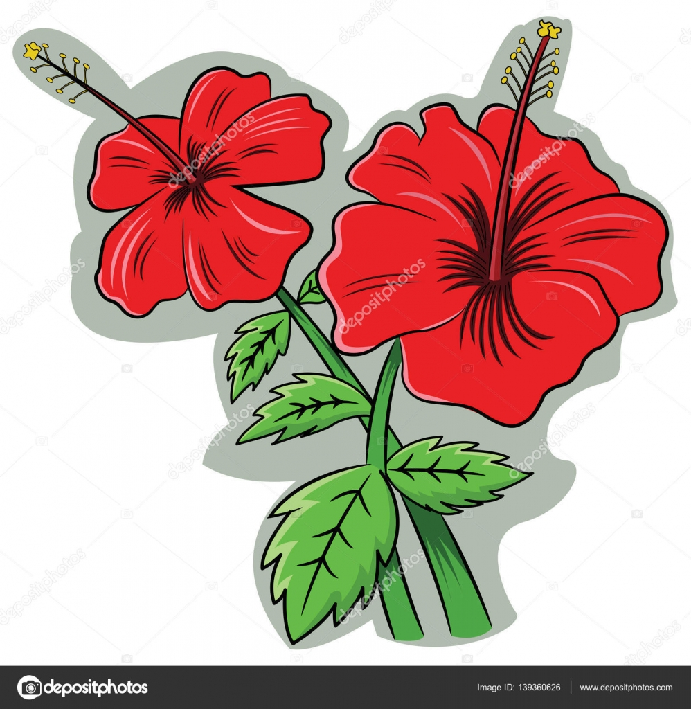 Hibiscus Rosa Sinensis Flower Cartoon Illustration Stock Vector