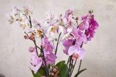 Fotografie fialové květy orchidejí na bílém pozadí
