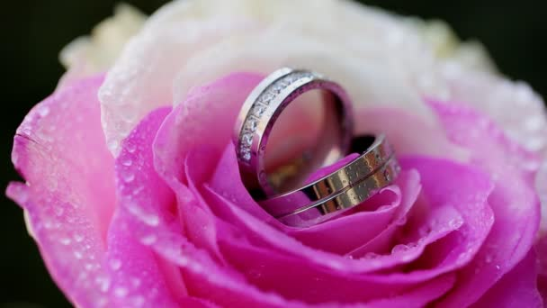 wedding rings rose taken closeup with water drops