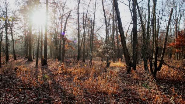 Sunrise őszi narancssárga erdei hd