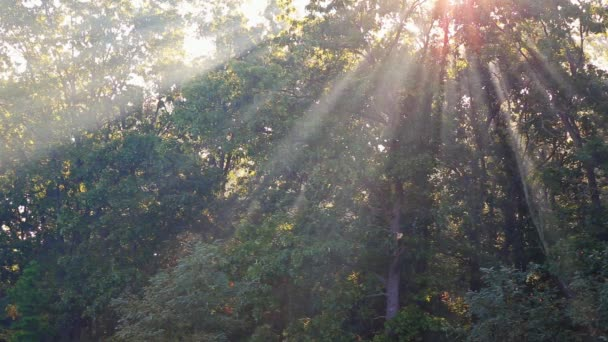 sluneční paprsky dopadající na cestě v podzimním lese mlhavé ráno