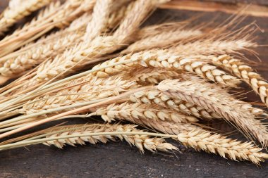 spikelets of wheat on the wooden background