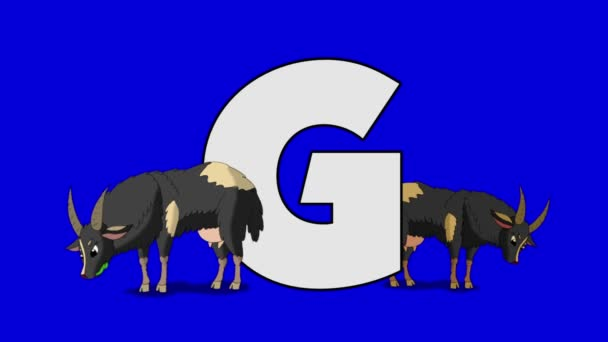 Letter G  and  Goat  (foreground)