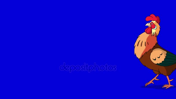 Passeggiate di Gallo rossiccio e corvi. Classico a mano animazione isolato su schermata blu
