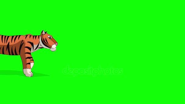 Tiger geht. animierte Bewegungsgrafik isoliert auf grünem Bildschirm