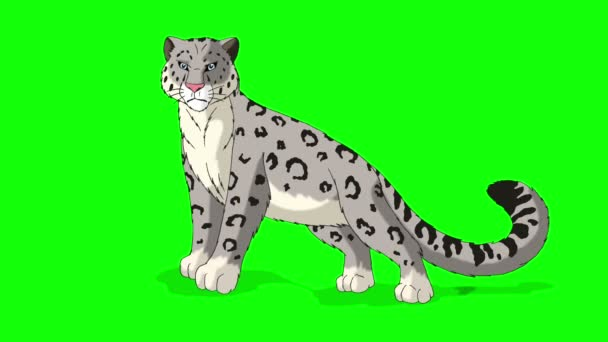 Snow Leopard Stands and Looks Around