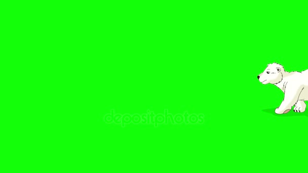 Kis sarki mackó sétál. Világos barna árnyék. Animált mozgás grafikus elszigetelt Green Screen