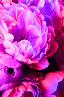 Peonies with neon light, background for Valentines day.