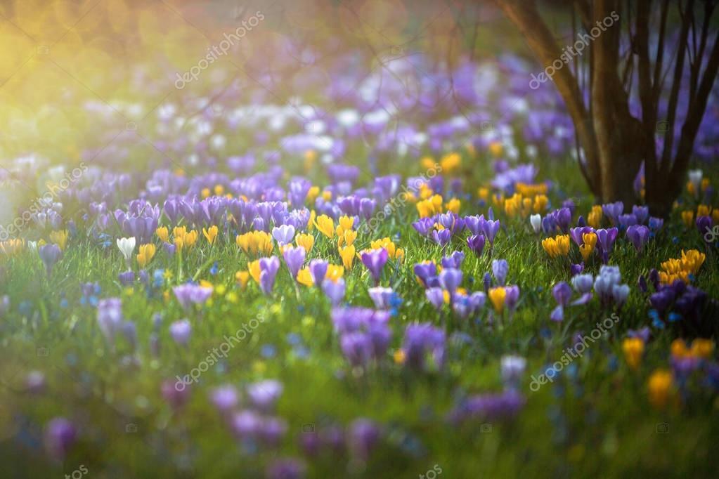Blumenwiese im Frhling