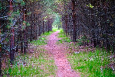 Forest path sunlight scene. Deep forest trail view. Forest trail landscape.