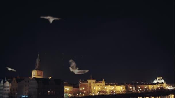 Bílé racky na obloze noční Praha - výhled na staré gotické město
