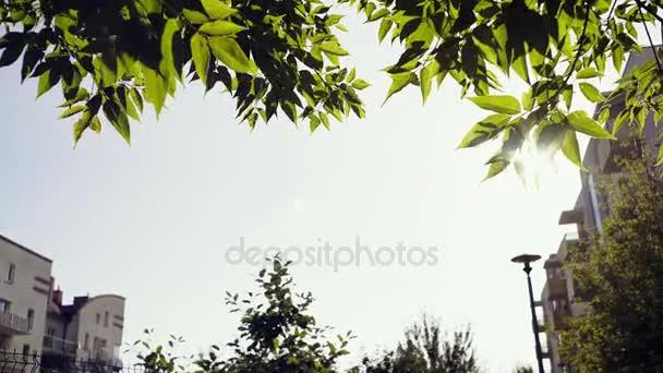 Slunce svítilo svěží strom listy na pozadí předměstské obytné budovy. Skvělé zázemí pro text ve středu na stavbě nebo environmentální téma