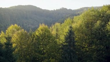 Picturesque view of green trees in forest on sunny day