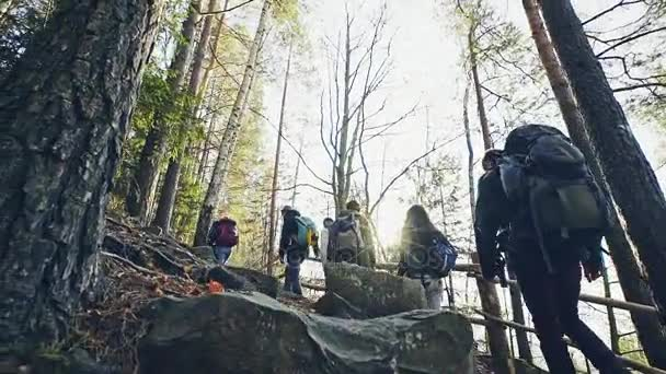 Group of friends hiking in mountain forest