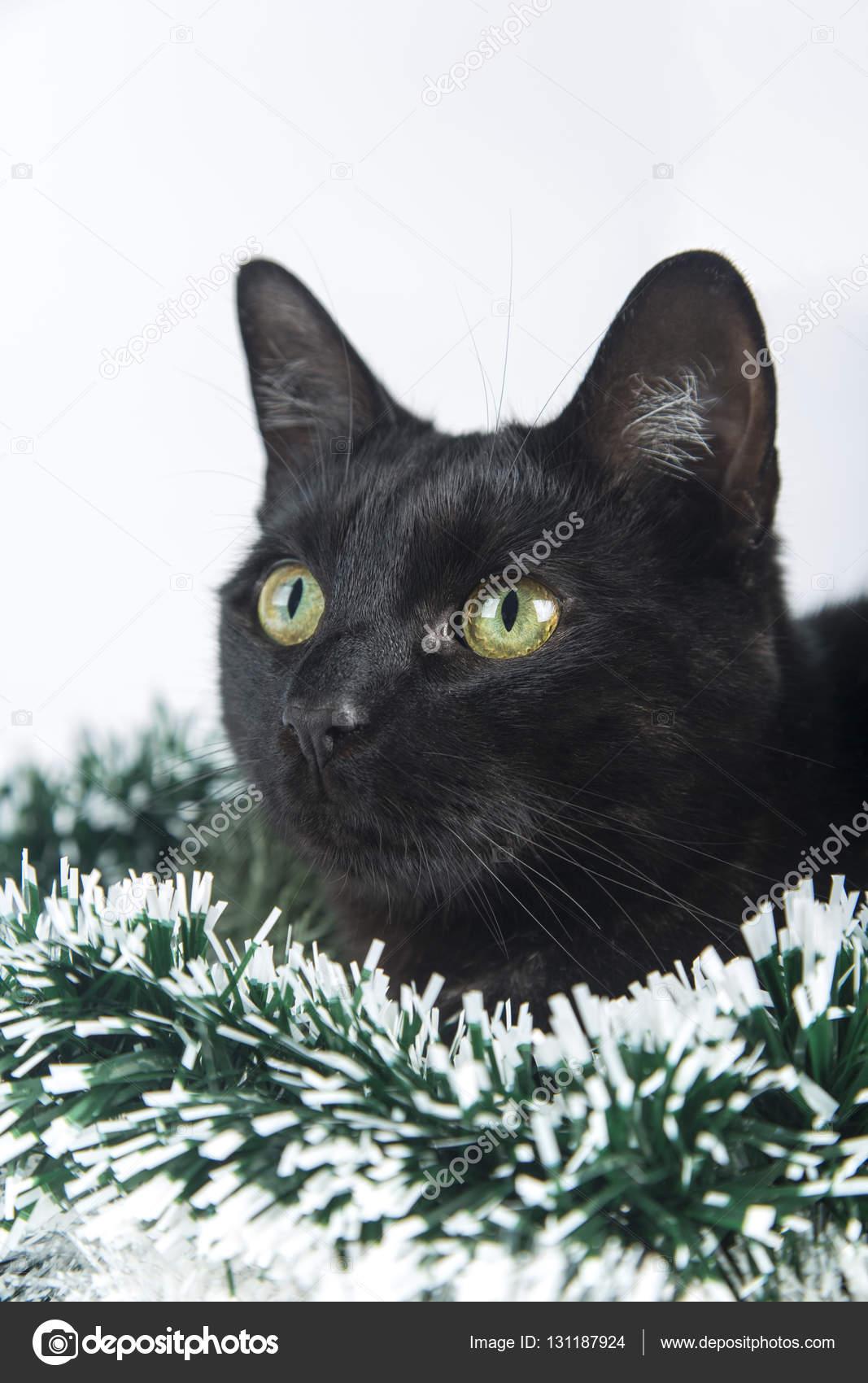 Hermoso gato negro se encuentra en los adornos de navidad - El gato negro decoracion ...