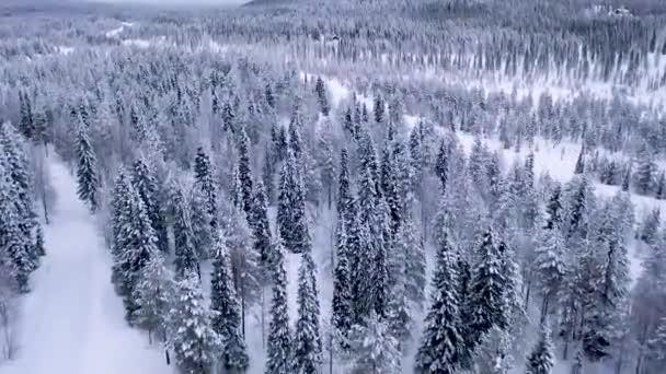 Letecký pohled na Laponsko. Pohled na zimní les v Laponsku ve Finsku