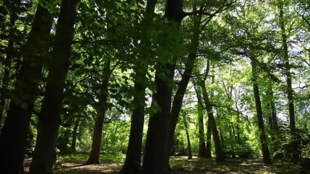 krásné listy se pohybují ve větru, kamera se pohybuje po stromech, sluneční erupce v objektivu
