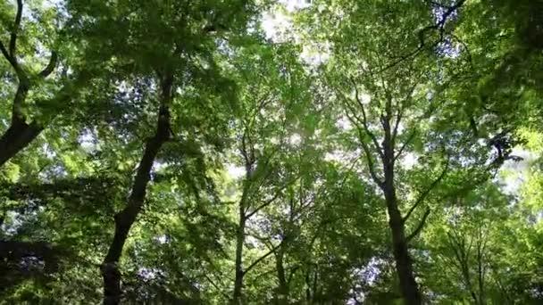 pohled na větve stromů, procházka lesem, sluneční erupce