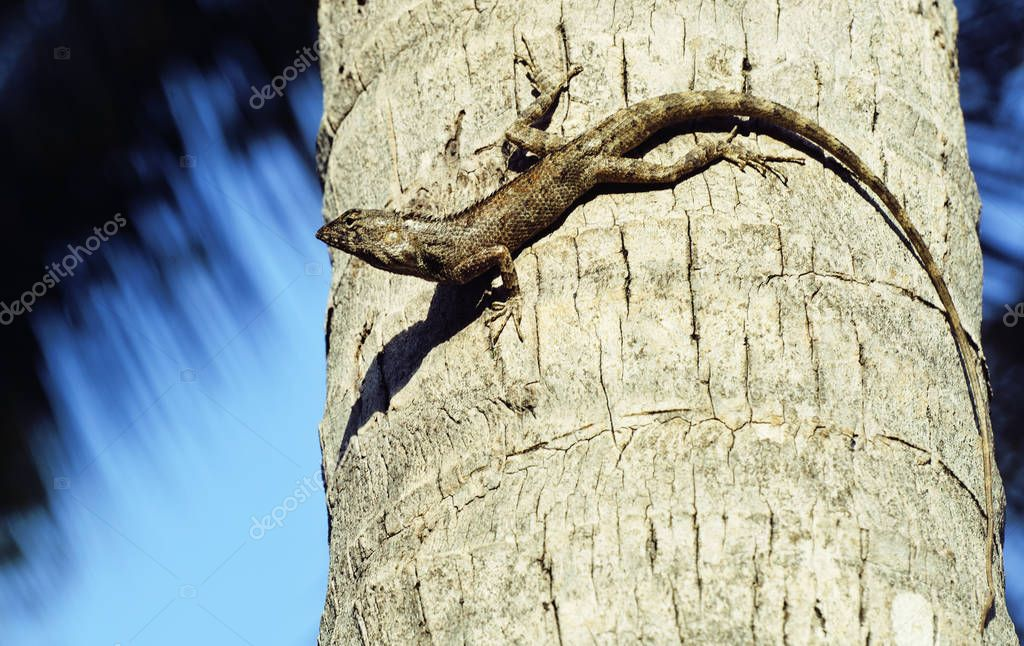 lizard in wild nature