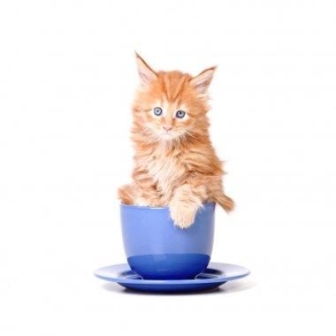 little kitten in a big tea mug