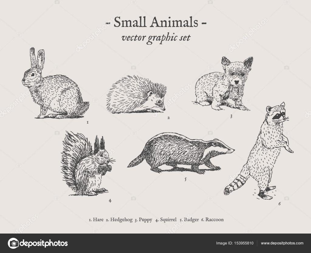 小動物ヴィンテージ イラスト セット ストックベクター Noundo