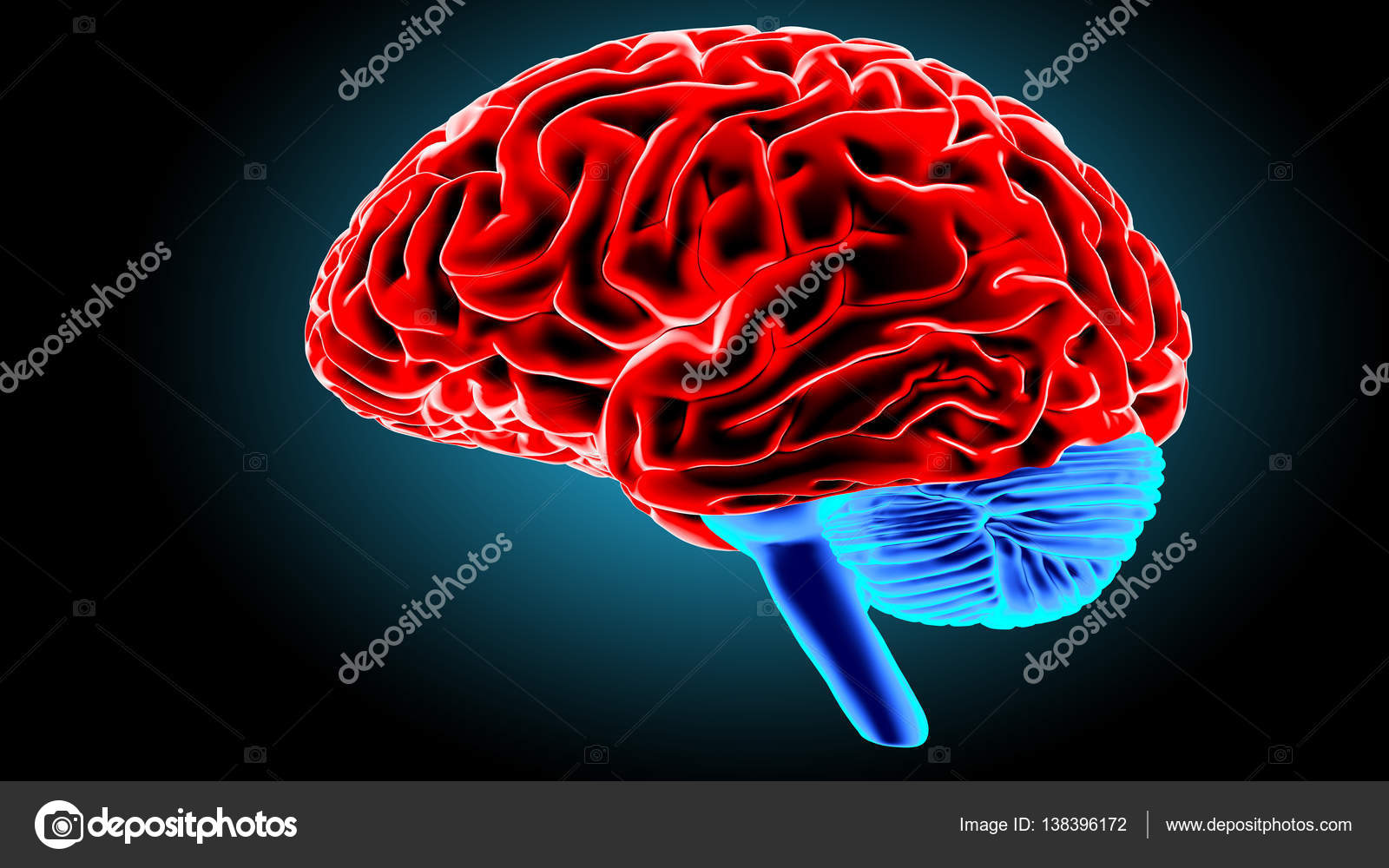 Human brain 3D render — Stock Photo © gorbovoi81 #138396172