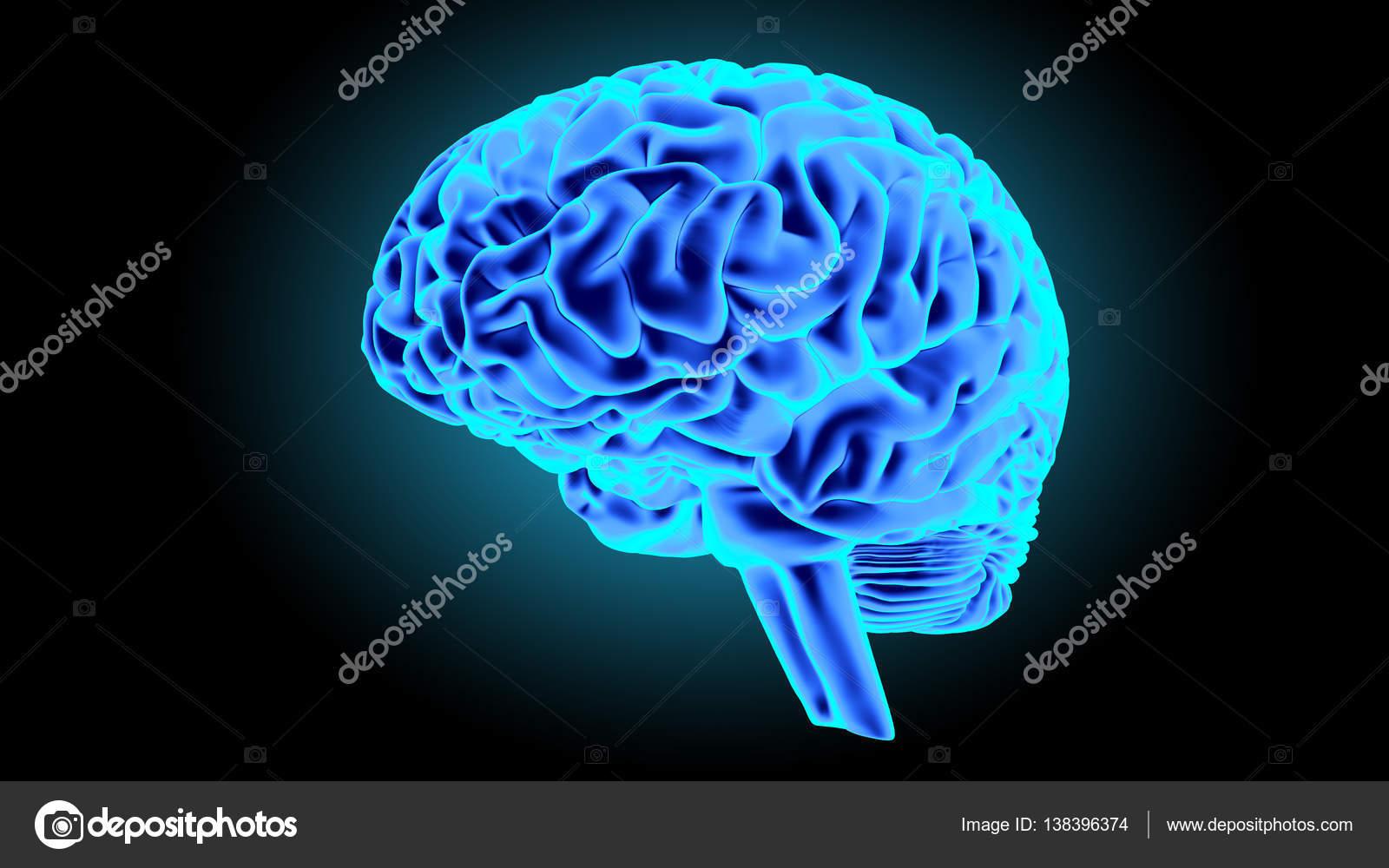 Menschliche Gehirn 3d render — Stockfoto © gorbovoi81 #138396374