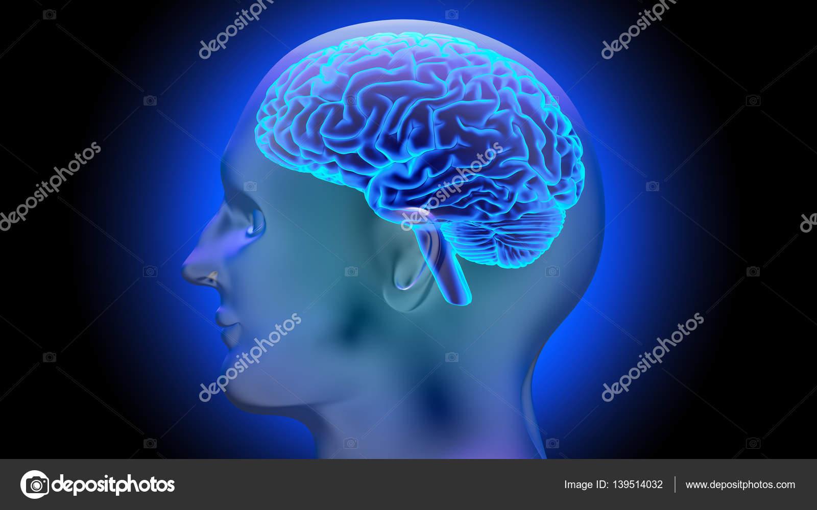 Render 3d cerebro humano — Foto de stock © gorbovoi81 #139514032