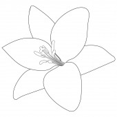 Lily. Sketch. Doodle style. Vector illustration. Summer flower. Outline on an isolated background. Coloring book for children. Idea for web design. A symbol of beauty and freshness. Floral print.