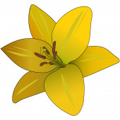 Yellow-orange lily. Summer flower. Colored vector illustration. Floral print. Plant on an isolated background. Cartoon style. Idea for web design, sticker, greeting card decoration, book. A symbol of beauty and freshness.