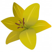 Yellow lily. Summer flower. Flat style. Colored vector illustration. Floral print. Plant on an isolated background. Idea for web design, sticker, greeting card decoration, book. A symbol of beauty and freshness.