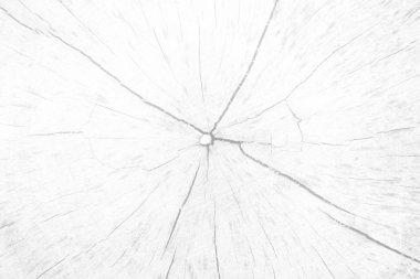 White Stump Texture Background.