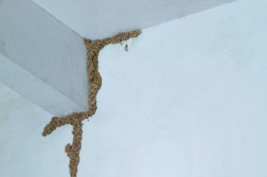 Termite problem in house