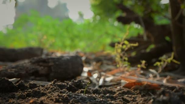 Animace rostoucích malých zelených rostlin na uzemnění